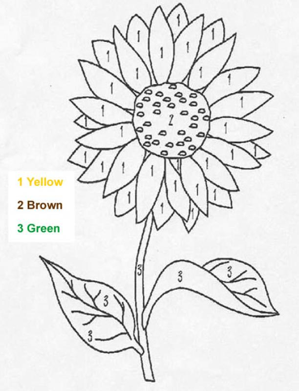 8 Flower Color By Number Worksheets KittyBabyLove